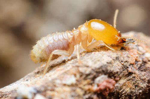 Summer Time and Termite Control