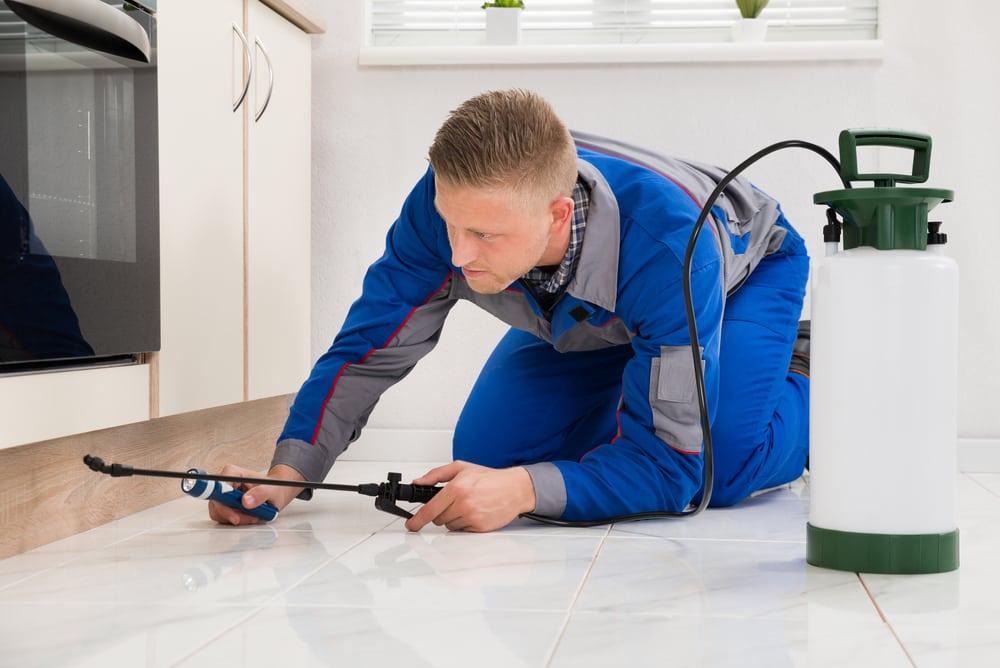 Things to Do at Home During Pest Control