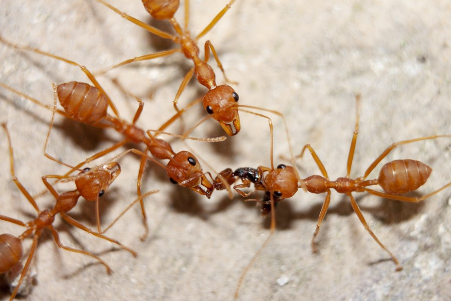 Secrets Ants Don't Want You to Know
