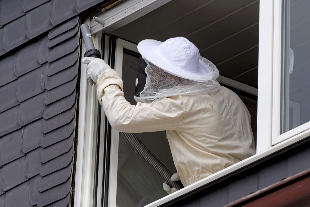 Should You Call a Professional Pest Controller?