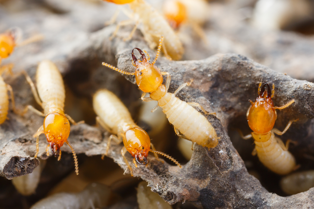 6 Things You Didn't Know About Termites