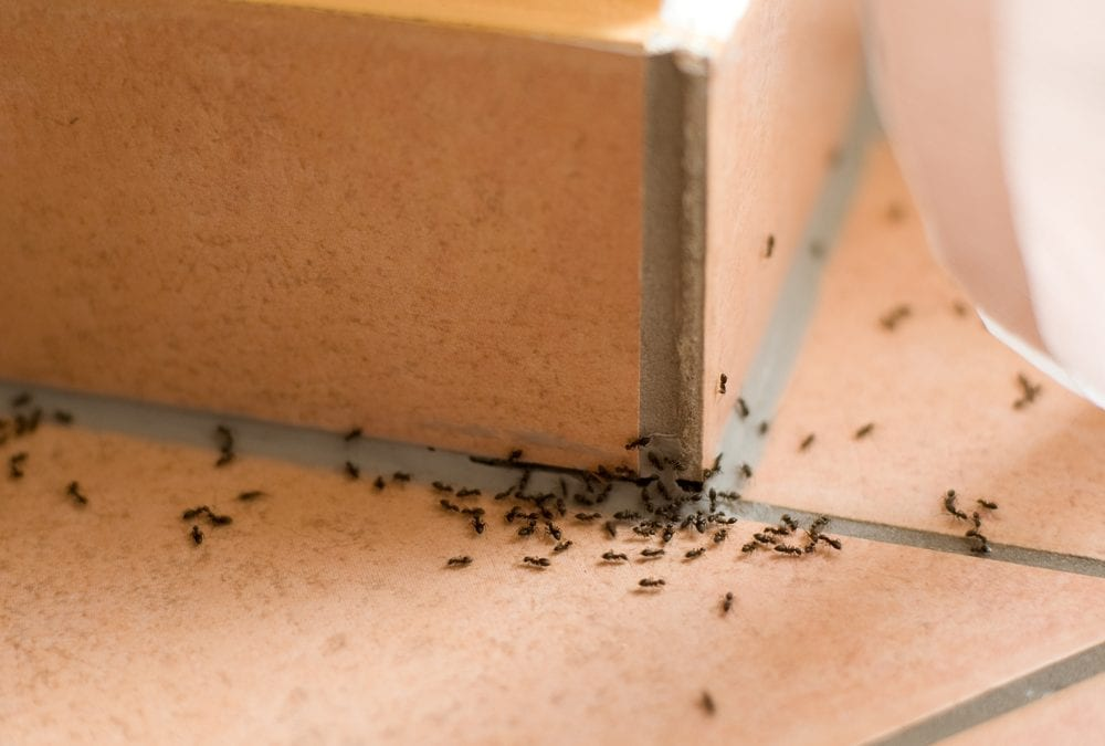 Know Your Enemy: The Art Of War Against Ants!